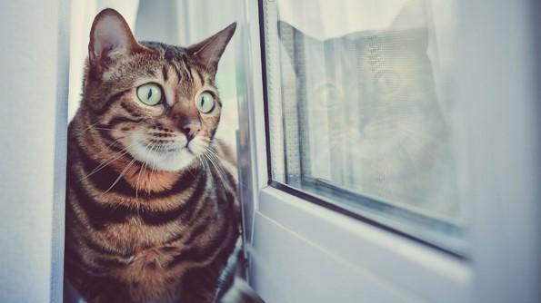 Hoe een goed kattenluikje het verschil kan maken